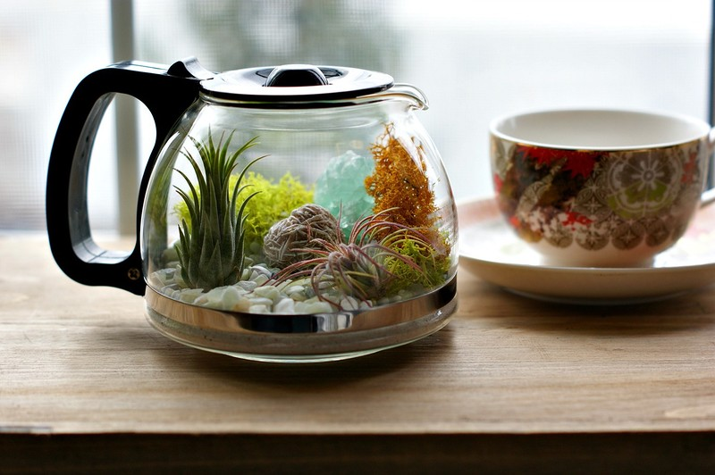 coffee_terrarium_1