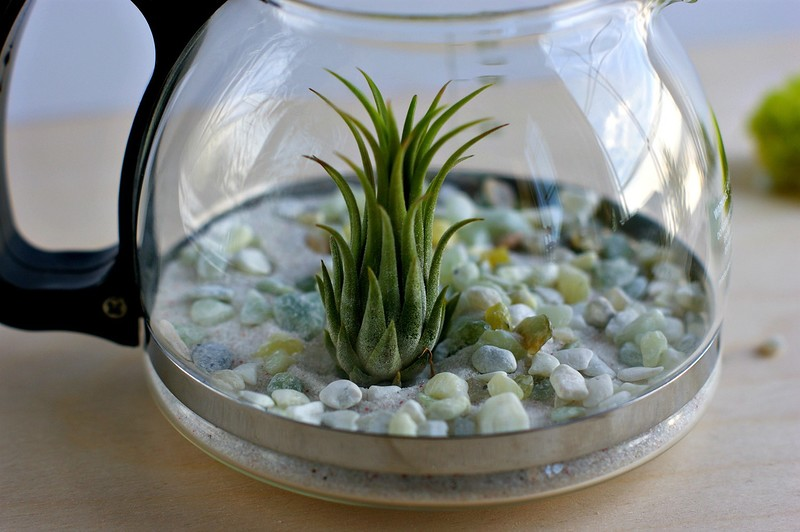 coffee_terrarium_3