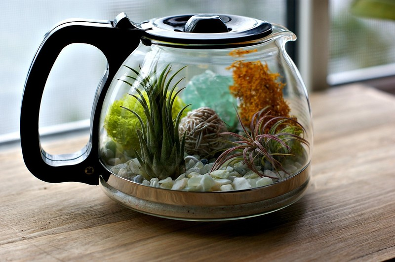 coffee_terrarium_4