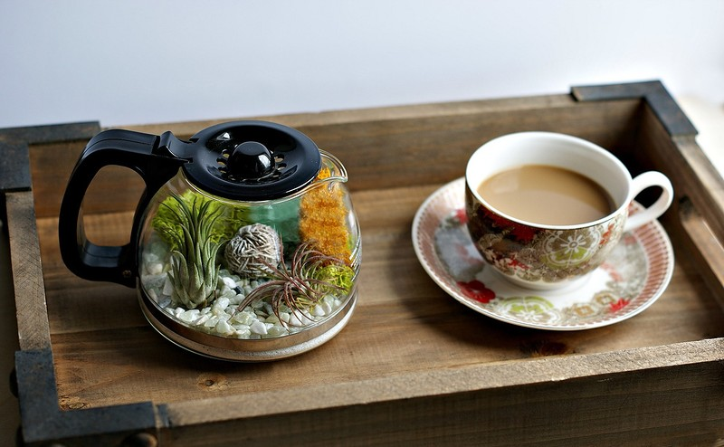 coffee_terrarium_5